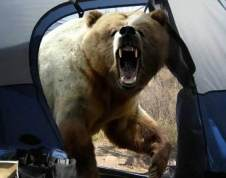 Bear-attacking-tent-courtesy-travelooce.com_