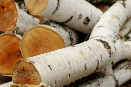 silver-birch-logs